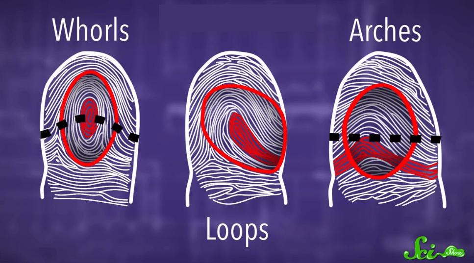 Pola sidik jari berdasarkan pola pertumbuhan