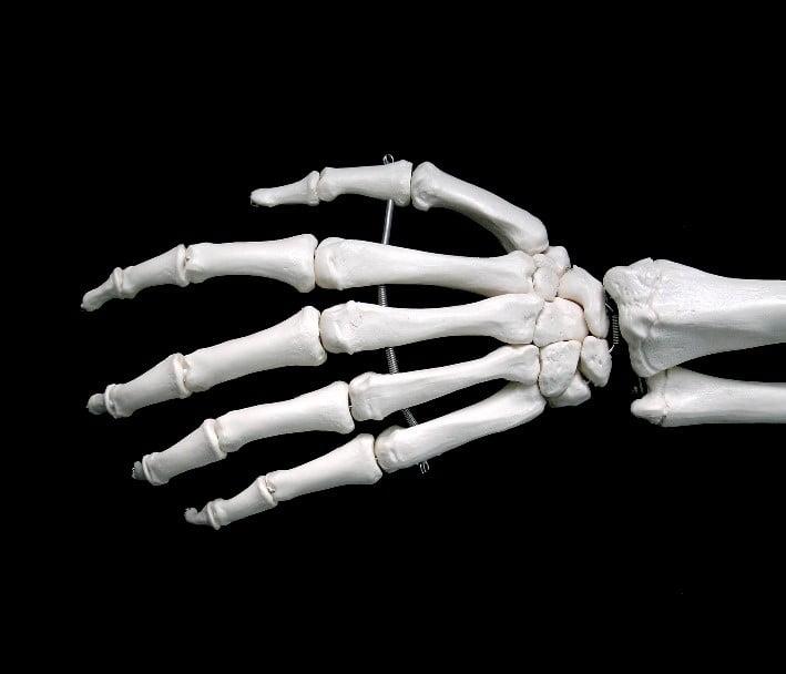 Fungsi tulang pergelangan tangan manusia