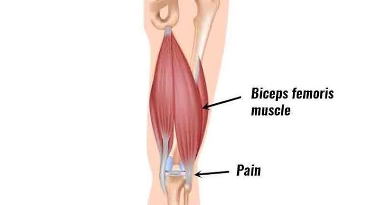 Fungsi otot tulang betis manusia