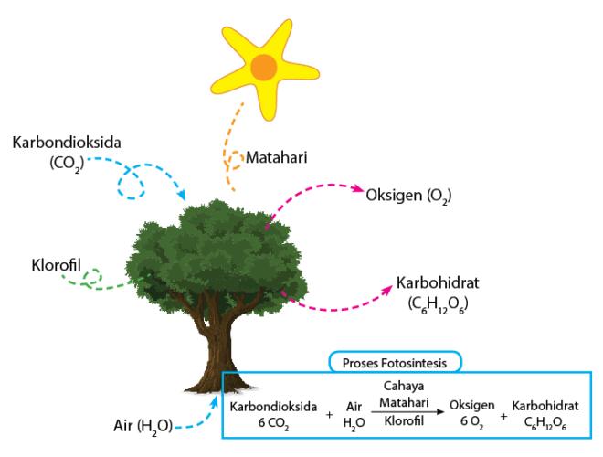 reaksi fotosintesis
