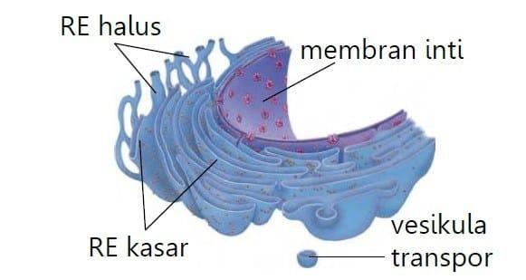 sel tumbuhan dan fungsinya