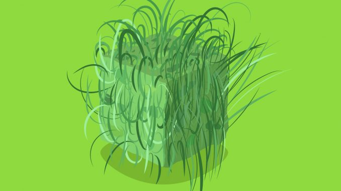 manfaat rumput teki