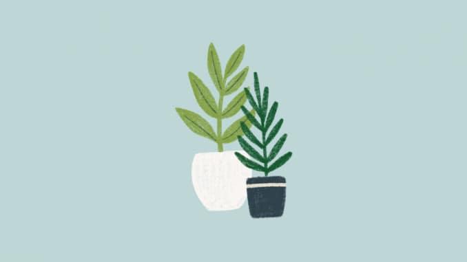 kualitas air untuk tanaman