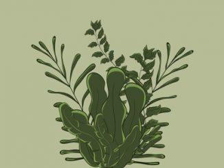 cara menanam kangkung