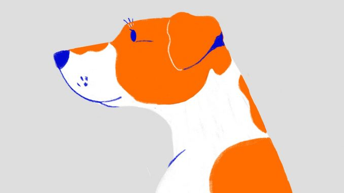 jenis anjing lucu