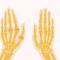 Fungsi Tulang Pergelangan Tangan (LENGKAP dengan Gambar dan Penjelasannya)